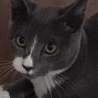 Adopt A Pet :: Moe - Trenton, NJ