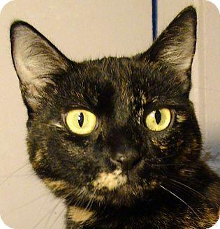 Domestic Shorthair Cat for adoption in El Cajon, California - Mia