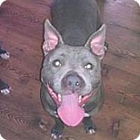 Adopt A Pet :: Delilah - Roaring Spring, PA