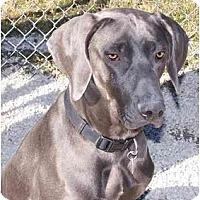 Adopt A Pet :: Max  **ADOPTED** - Eustis, FL