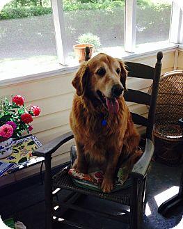 Golden Retriever Mix Dog for adoption in BIRMINGHAM, Alabama - Sissy