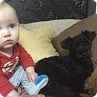 Adopt A Pet :: FAITH - Salt Lake City, UT