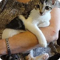 Adopt A Pet :: Jordy - St. Louis, MO