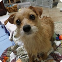 Adopt A Pet :: Lucy - Huntsville, AL