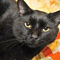 Adopt A Pet :: Kathy - Garland, TX