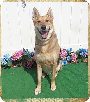 German Shepherd Dog Dog for adoption in Marietta, Georgia - DAWSON
