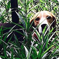 Adopt A Pet :: Butler - Houston, TX