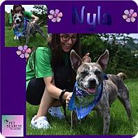 Adopt A Pet :: Nyla - Washington, PA