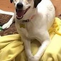 Adopt A Pet :: Dolly - DeSoto, IA