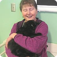 Adopt A Pet :: Blackie - Chisholm, MN