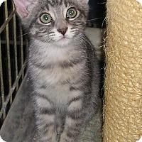 Adopt A Pet :: Audie - Sherman Oaks, CA