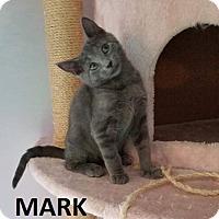 Adopt A Pet :: Mark - Painted Post, NY