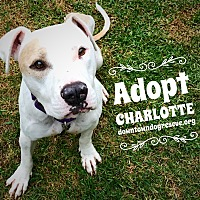 Adopt A Pet :: Charlotte - Los Angeles, CA