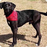 Adopt A Pet :: RAMZI - Edmond, OK