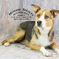 Adopt A Pet :: Mary-AC-18633-K - Greeneville, TN