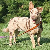 Adopt A Pet :: Ohana - Marietta, OH