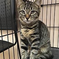 Adopt A Pet :: Carter - East Brunswick, NJ