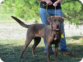 Labrador Retriever Mix Dog for adoption in Palestine, Illinois - Mattie