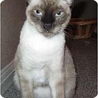 Adopt A Pet :: Skippy - Austin, TX