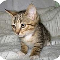 Adopt A Pet :: Nadia - Shelton, WA