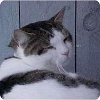 Adopt A Pet :: Salvatore - Lunenburg, MA