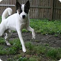 Adopt A Pet :: Grady - Virginia Beach, VA