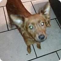 Adopt A Pet :: ASIA - Tampa, FL