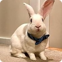 Adopt A Pet :: Neville - Woburn, MA