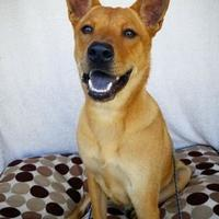 Shepherd (Unknown Type) Mix Dog for adoption in Fredericksburg, Texas - Connor