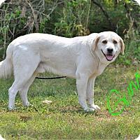 Adopt A Pet :: Gunner - Lebanon, MO