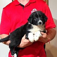 Adopt A Pet :: Emma - South Euclid, OH