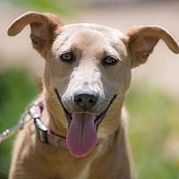 Adopt A Pet :: Angy - Irvine, CA