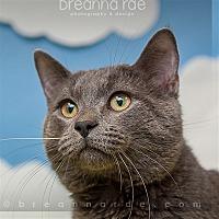 Adopt A Pet :: Kaiser - Sheboygan, WI