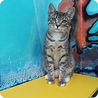 Adopt A Pet :: Barkley - Newport Beach, CA