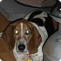 Adopt A Pet :: Douglas - Columbia, SC