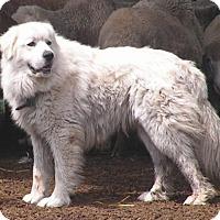 Adopt A Pet :: Jack - Minneapolis, MN