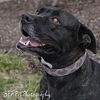 Adopt A Pet :: Tori - Cincinnati, OH