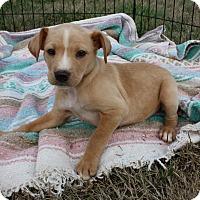 Adopt A Pet :: Terra $250 - Seneca, SC