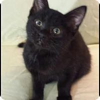 Adopt A Pet :: Marcela - Orlando, FL