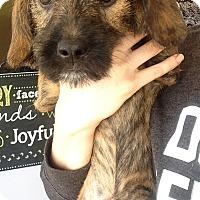 Adopt A Pet :: Gracie pup 1 - Pompton Lakes, NJ