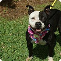 Adopt A Pet :: Nova - Kinston, NC