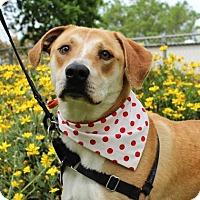 Adopt A Pet :: Noodle - Chico, CA