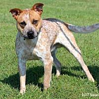 Adopt A Pet :: Scrappy - Bedford, VA