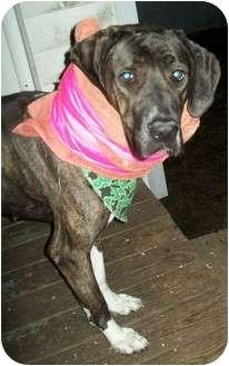Cane Corso/Great Dane Mix Dog for adoption in Flint, Michigan - Lena