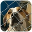 Photo 2 - Pointer/American Bulldog Mix Dog for adoption in Hubertus, Wisconsin - Lilly