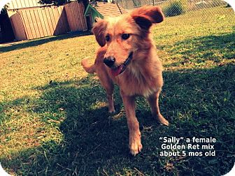 Golden Retriever Mix Dog for adoption in Gadsden, Alabama - Sally