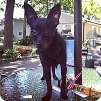 Adopt A Pet :: Bonnie - Shirley, NY