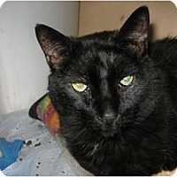 Adopt A Pet :: Eddie - Phoenix, AZ