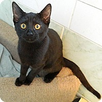 Adopt A Pet :: Casseopeia - The Colony, TX