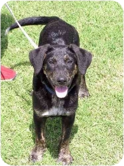 Border Collie/Shepherd (Unknown Type) Mix Dog for adoption in Carrollton, Texas - Ethan